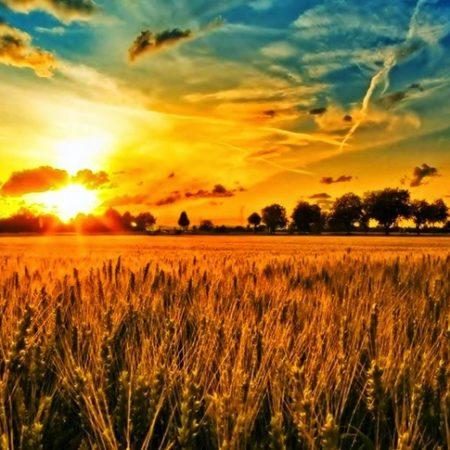 campos-de-trigo-001-1000