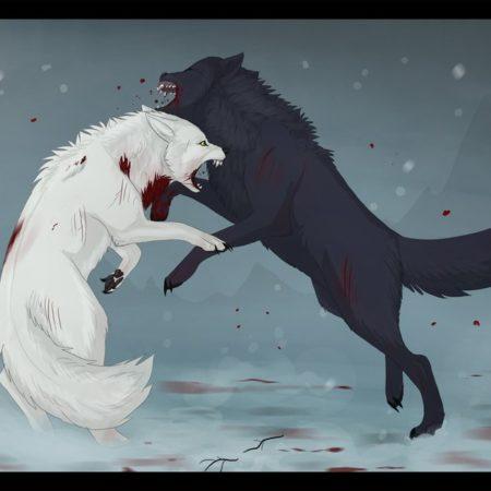 luta_dois_lobos_branco_preto