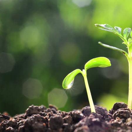 semente-planta
